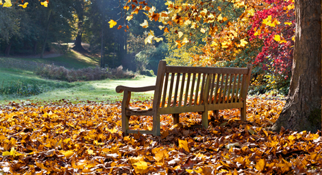 A bench looking out on to a park, there is a tree with falling autumn leaves and there are leaves on the ground